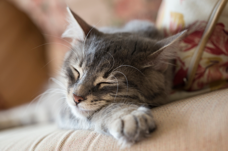 Our cleaning process helps reduce allergy symptoms caused by pets sleeping on the furniture like the cat shown here.